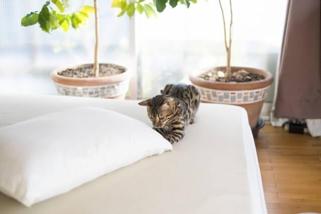 ベッドと猫